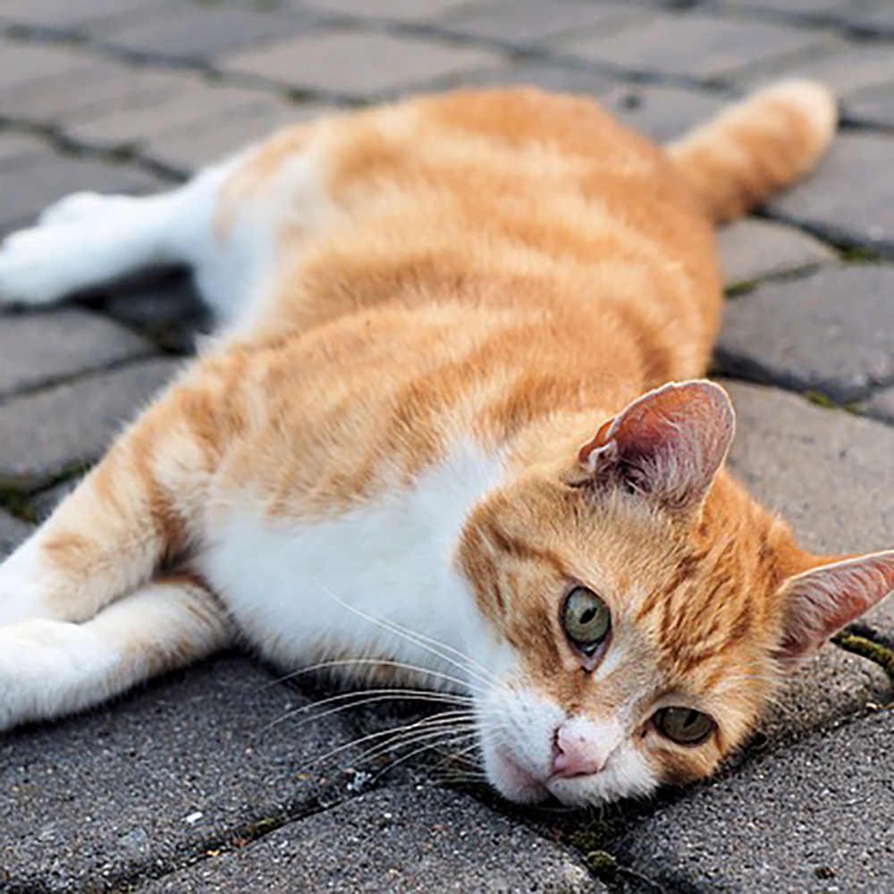 Cat laying on a patio