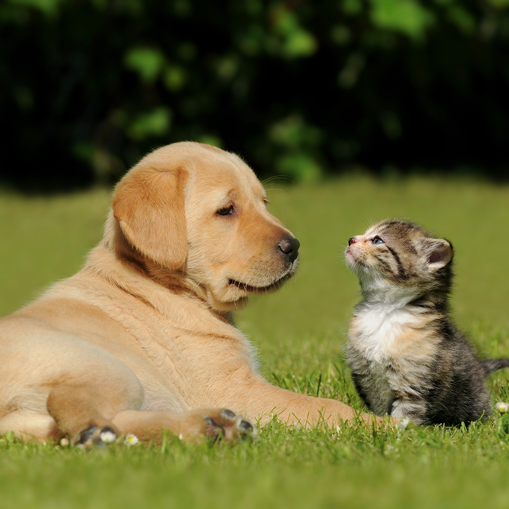 Dog and cat in a field