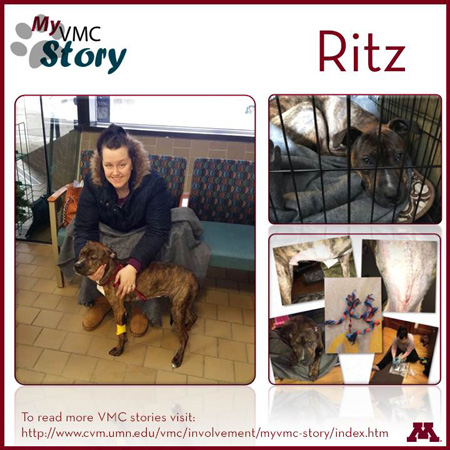 Ritz, a Pit Bull, with owner; resting in a kennel; during recovery: dog resting, showing scar, and rope toy.