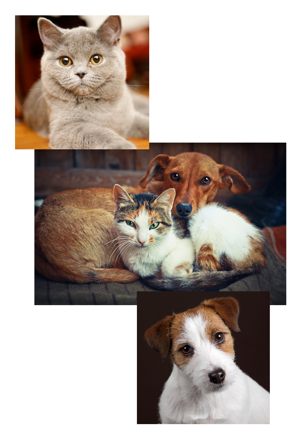 Collage of cat and dog images