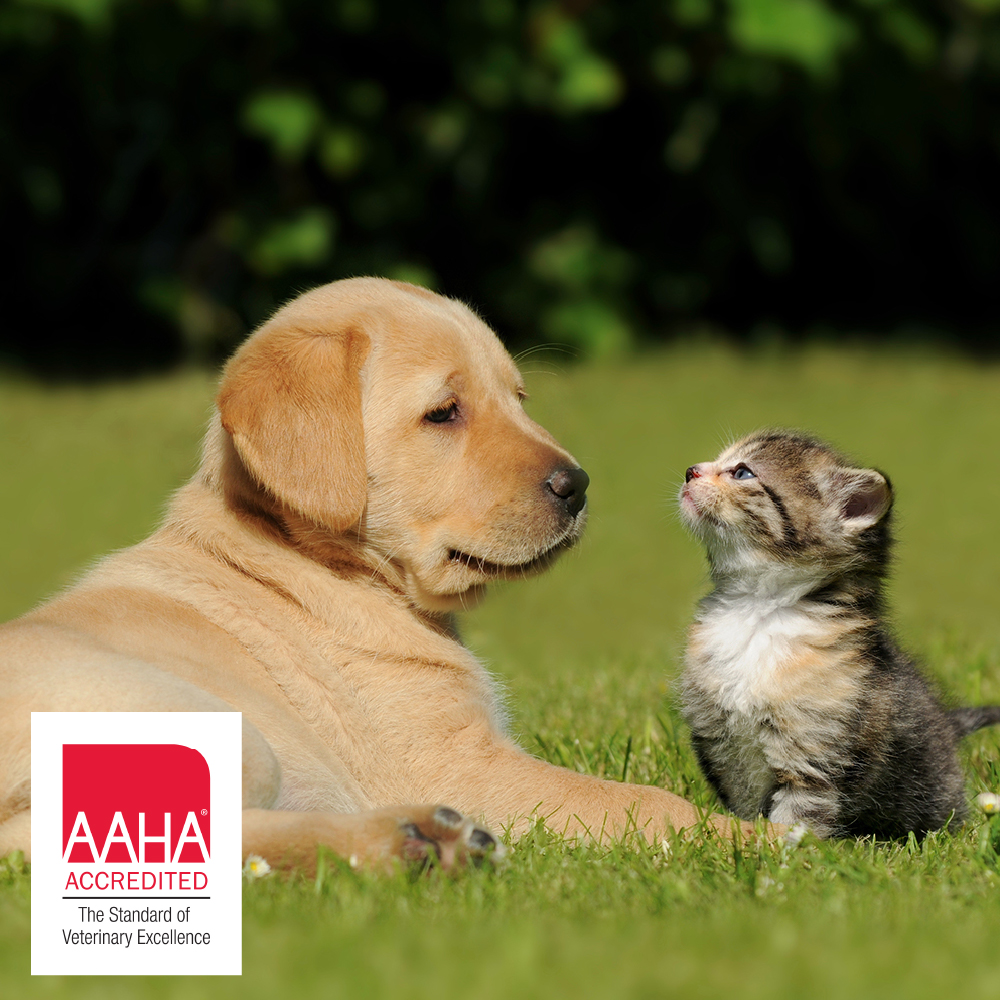 Dog and cat in a field with accreditation logo