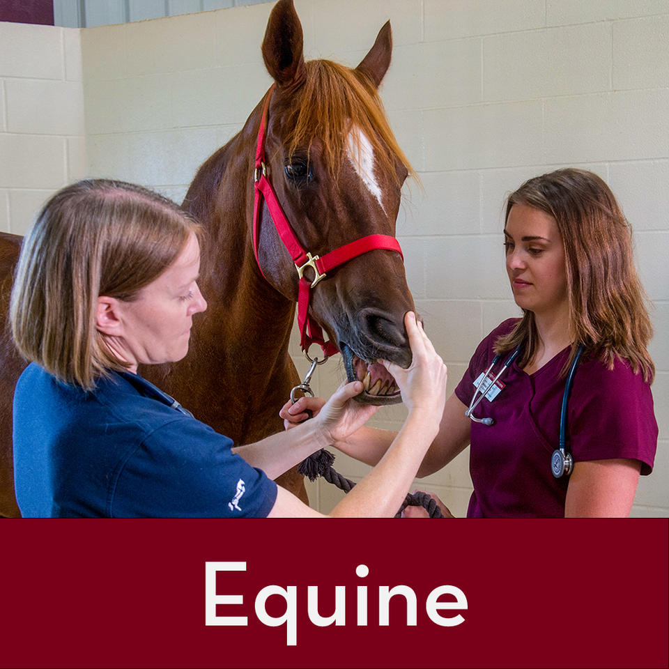A veterinarian and a student caring for a horse