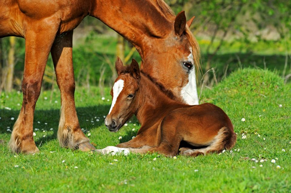Horse and foal in green pasture