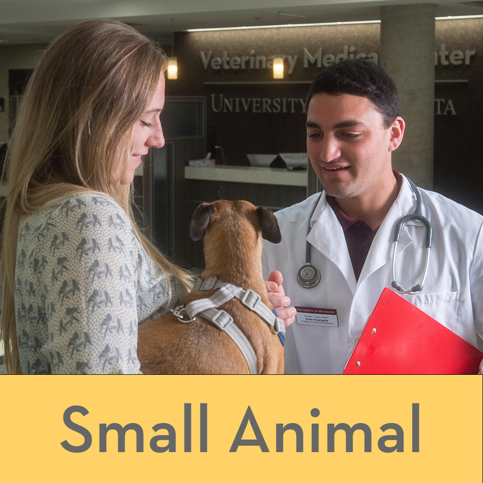 A client with her dog talking to a veterinarian