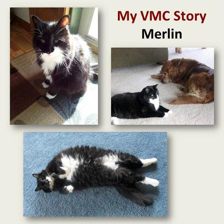 Merlin, a black cat with white markings, sitting, sitting with a brown dog and rolling on his back.