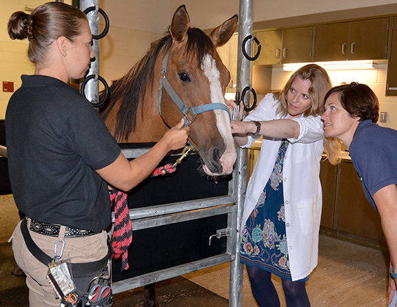Three women providing care to a horse in a stable-like environment